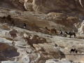 A high camel pass, Sinai, Go tell it on the mountain