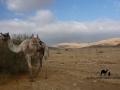 Camel, Wadi Zelega, Sinai, Go tell it on the mountain_result