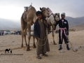 Jockeys & camels, Sinai, Go tell it on the mountain