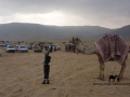 Muzeina boy & camel, Wadi Zelega, Go tell it on the mountain