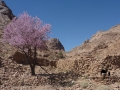 Garden & almond tree, Sinai, Go tell it on the mountain