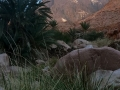 Grasses, Wadi Madaman, Sinai, Go tell it on the mountain_result