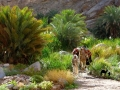Palms and thickets, Sinai, Go tell it on the mountain_result