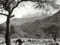 Acacia, Wadi Feiran, Go tell it on the mountain,