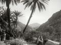 Camel & palms, Sinai, Go tell it on the mountain