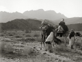 Camels grazing, Sinai, Go tell it on the mountain