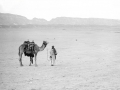 Desert, Sinai,