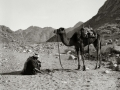 Man & camel, Go tell it on the mountain