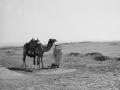 Man & camel, Sinai, Go tell it on the mountain