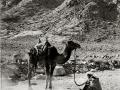 Old man & camel, Sinai, Go tell it on the mountain