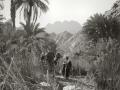 Wadi Feiran with man & camel, Sinai, Go tell it on the mountain