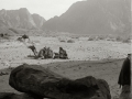 Wadi Mukattab, with camels, Go tell it on the mountain