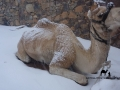 Camel in the snow, Sinai, Go tell it on the mountain_result
