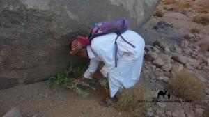 Bedouin picking oregano, Sinai, Go tell it on the mountain_result