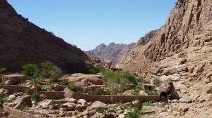 Garden, Wadi Arbain, Sinai, Go tell it on the mountain_result