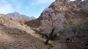 Wadi Zawatin, Sinai, Go tell it on the mountain_result