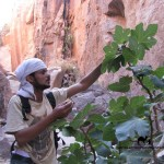 Wild figs, Sinai, Go tell it on the mountain_result