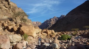 Wadi Sig Sinai, Go tell it on the mountain_result