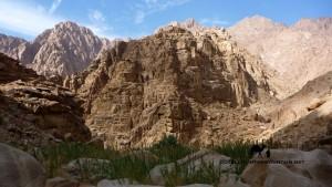 Wadi Sig bamboo thickets, Sinai
